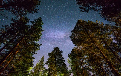 redwoods-against-milky-way